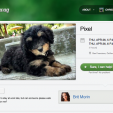 Spotwag Helps You Find a Pet Sitter Among Your Friends
