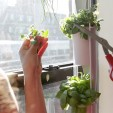 Windowfarms Turns Any Window into an Edible Garden