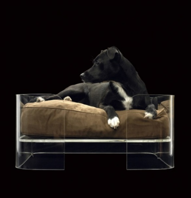 Bow Wow 20 Modern Pet Beds For Your Furry Friends Brit Co
